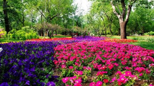 Оформление цветника - цветник на даче своими руками (3)