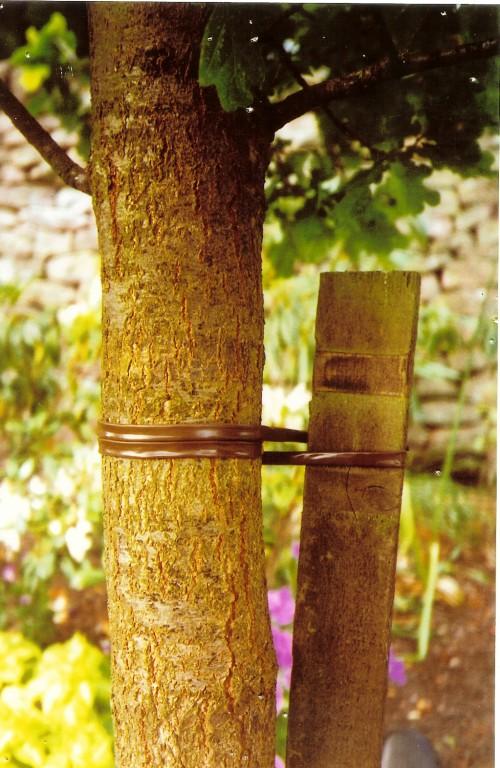 Подвязки для винограда - уход за виноградом (4)