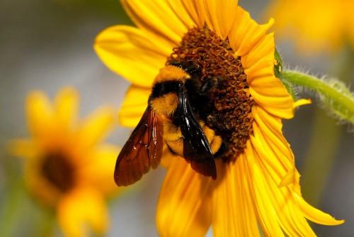 Пчеловодство для чайников - как заниматься пчеловодством (3)