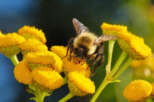 Пчеловодство для чайников - как заниматься пчеловодством (7)