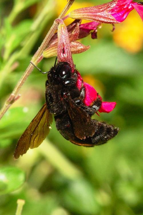 Пчеловодство для чайников - как заниматься пчеловодством (13)