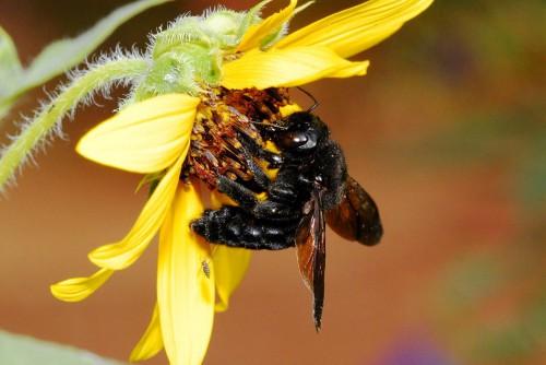 Пчеловодство для чайников - как заниматься пчеловодством (14)