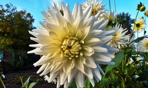 Рабатка - фото цветников (15)