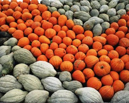Сладкие сорта тыквы - полезные свойства тыквы (1)