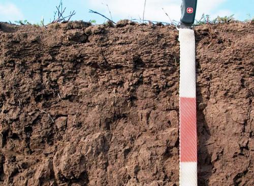 Состав почвы - определение PH почвы (5)