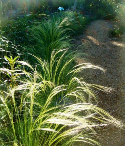 Фитонциды растений - защита сада (16)