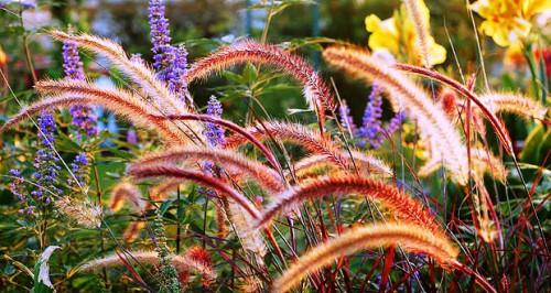 Фитонциды растений - защита сада (14)