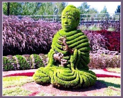 Топиарное искусство - виды растений и фото (49)