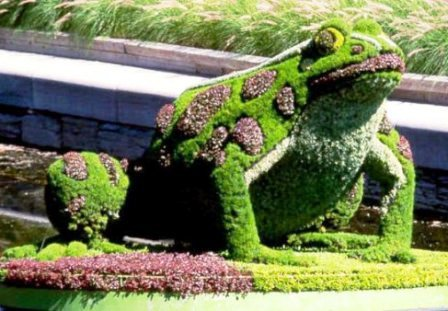 Топиарное искусство - виды растений и фото (53)