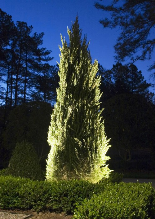 Как сделать освещение - в саду - фото (5)