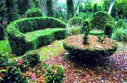 Топиарное искусство - виды растений и фото (3)