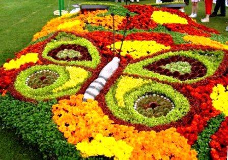 Топиарное искусство - виды растений и фото (4)