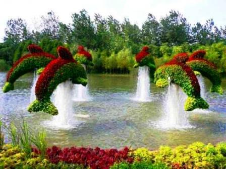 Топиарное искусство - виды растений и фото (5)