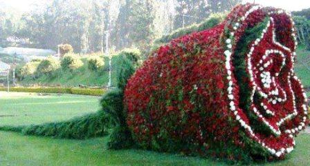 Топиарное искусство - виды растений и фото (6)