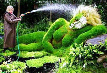 Топиарное искусство - виды растений и фото (8)