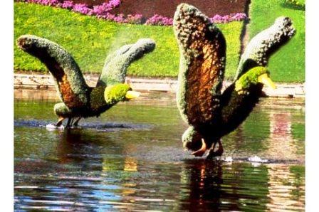 Топиарное искусство - виды растений и фото (15)