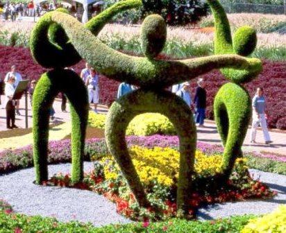 Топиарное искусство - виды растений и фото (17)