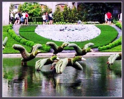 Топиарное искусство - виды растений и фото (29)