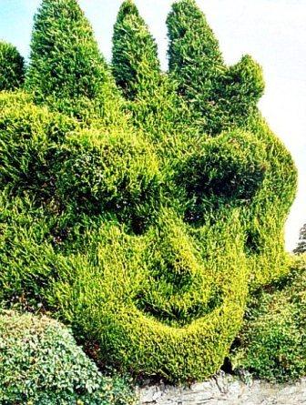 Топиарное искусство - виды растений и фото (32)