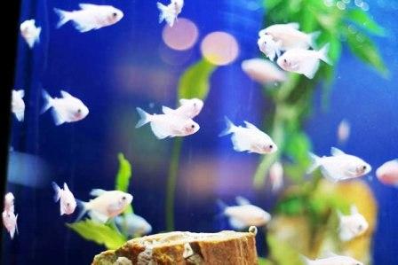 Разведение рыб в пруду (5)
