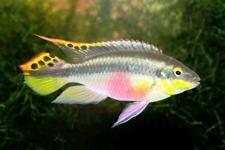 Разведение рыб в пруду (6)