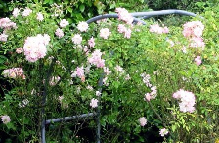 Сад любви (6)