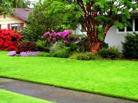 Чем удобрять газон (4)