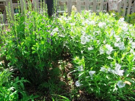 Интересные идеи для сада своими руками (6)