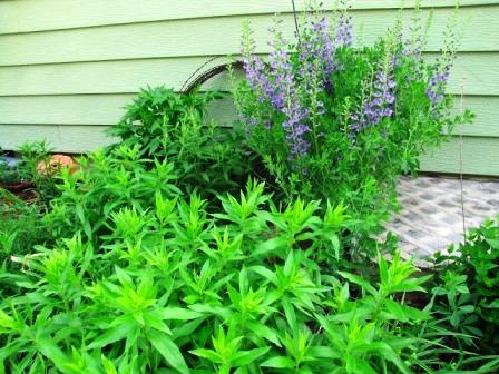 Интересные идеи для сада своими руками (9)