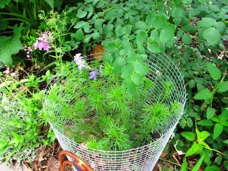 Интересные идеи для сада своими руками (15)