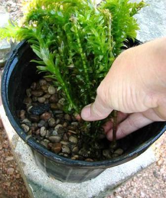 Мини пруд своими руками (6)