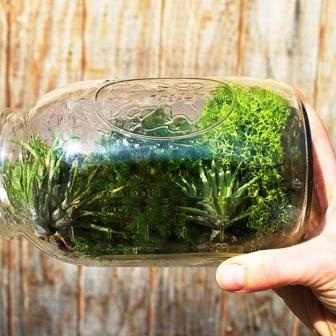 Растения в банке (5)