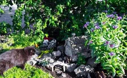 Идеи для маленького сада (5)