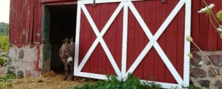 Как сделать дверь в сарай (1)