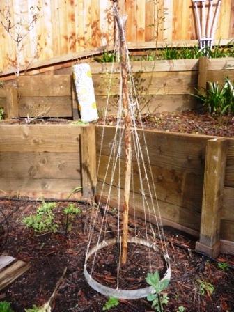 Опоры для вьющихся растений своими руками (3)