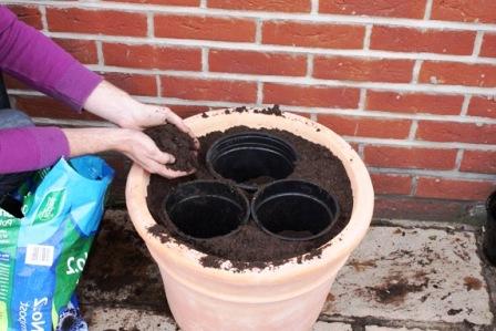Пересадка домашних растений (2)