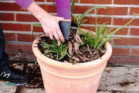 Пересадка домашних растений (4)