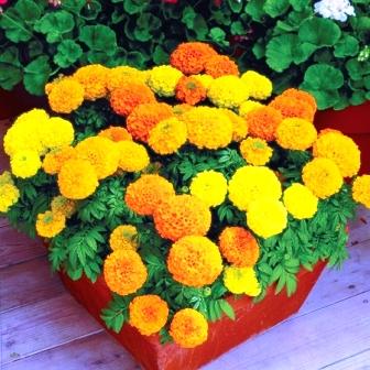 Пересадка домашних растений (6)