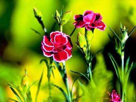 Пересадка домашних растений (7)