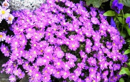 Пересадка домашних растений (8)