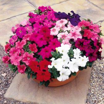 Пересадка домашних растений (9)