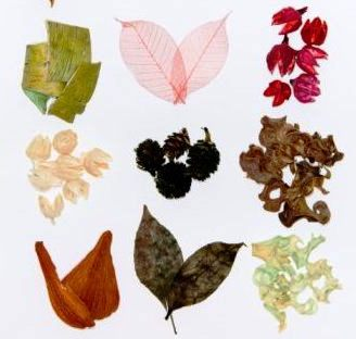 Cушка растений - декор (5)