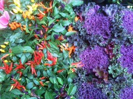 Cушка растений - декор (16)