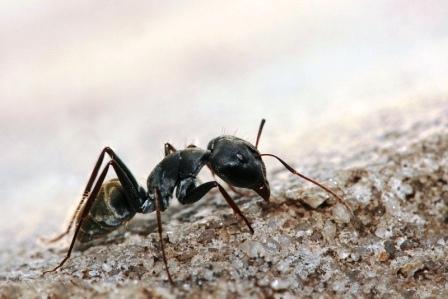Как избавиться от муравьев на даче (1)