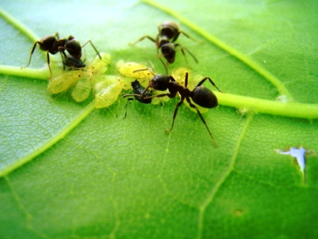 Как избавиться от муравьев на даче (2)