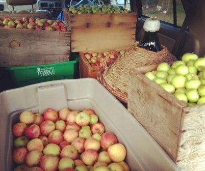 Как сделать домашнее вино из яблок (2)