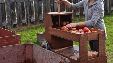 Как сделать домашнее вино из яблок (1)
