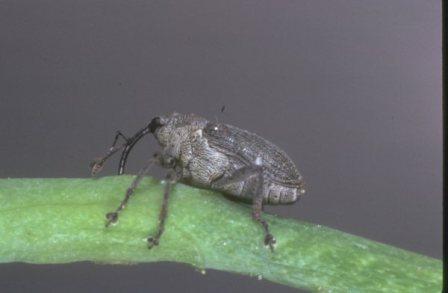Средства борьбы с вредителями капусты (2)