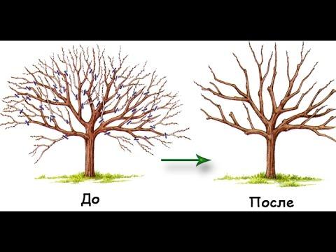 омолаживание деревьев